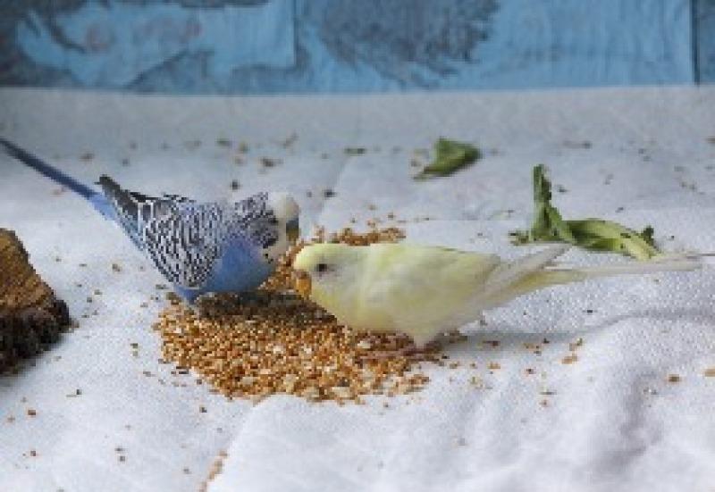 pokarm ptaki