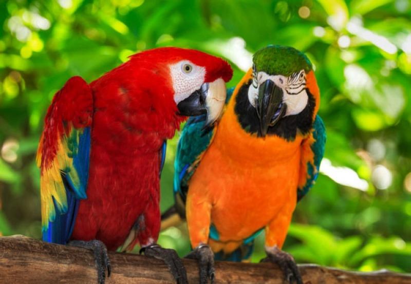 box-ptaki